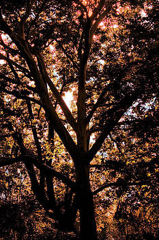 Digital Autumn by Dimitar Smilyanov