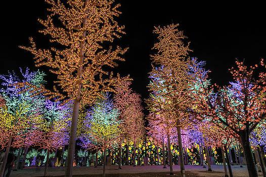 Digital Trees by Mario Legaspi