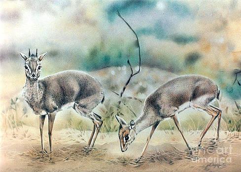 Dik Dik Antelope by Gail Dolphin