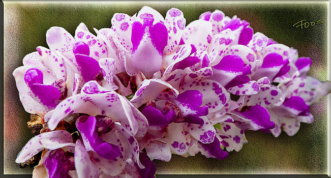 Roy Foos - Dino Nest Orchid