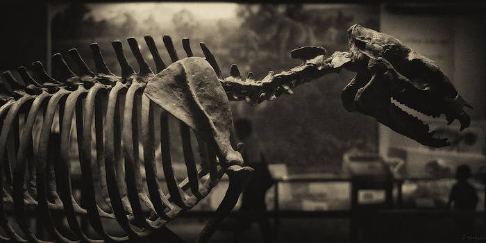 Dinosaur Bones 2 by Joseph Hedaya