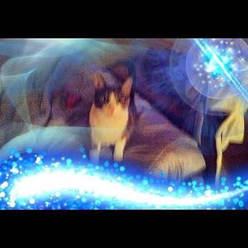 Disco Kitty #pearl by Kahsha Ward