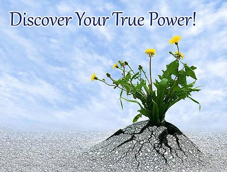 Dreamland Media - Discover Your True Power