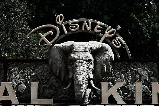 Disney Animal Kingdom by Saibal Ghosh
