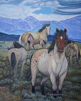 Distinctly Wild by Carlos Sandoval