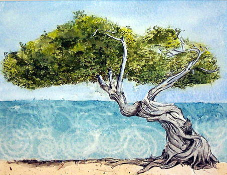 Divi Divi Tree by Lynn Babineau