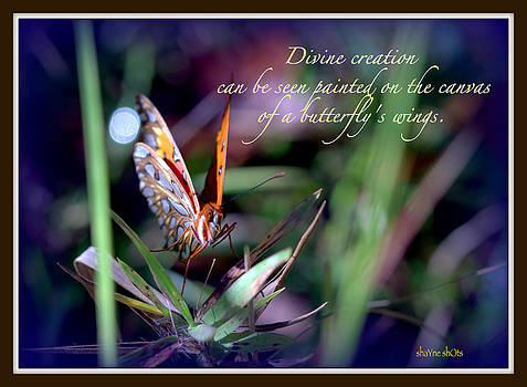 Divine Creation by Shayne Johnson Fleming