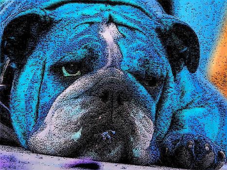 Do I Look Like I Am A Happy Dog by Kathy Budd
