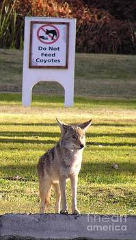 Christine Stack - Do Not Feed Coyotes