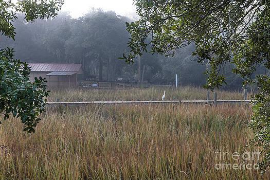 Dale Powell - Dock Side Fog