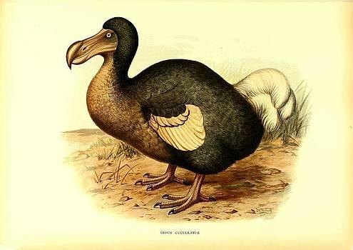 Dodo Bird Didus Cuculatus by Little Vintage Chest