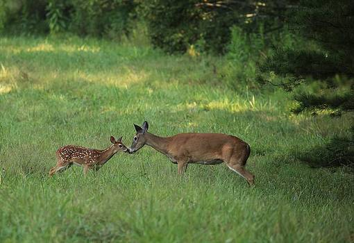Doe and Fawn by Doug McPherson