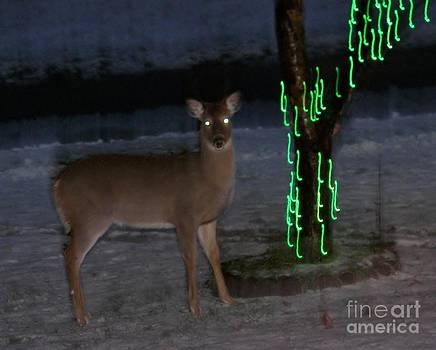 Judy Via-Wolff - Doe Visits My Tree Lights