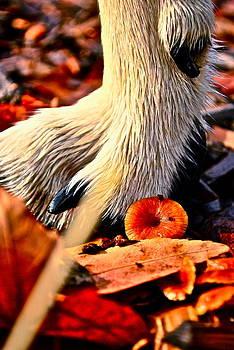 Dog And A Mushroom by Rae Berge