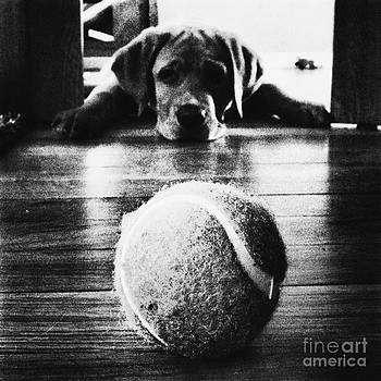Rachel Barrett - Dog and a Tennis Ball