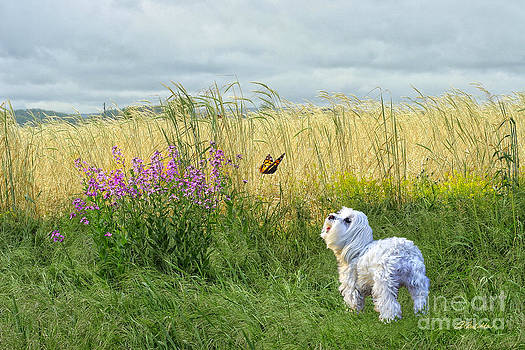 Dog and Butterfly by Andrea Auletta