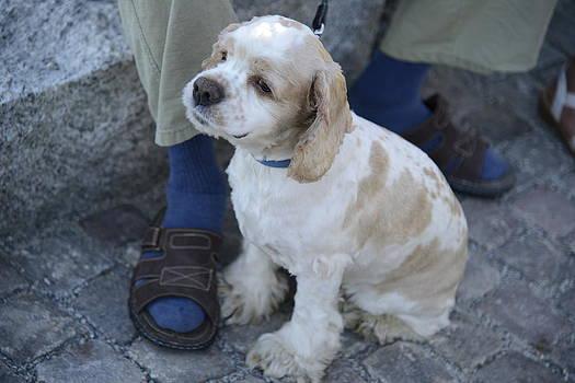 Teo SITCHET-KANDA - Dog And True Friendship 10
