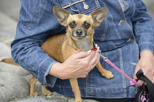 Teo SITCHET-KANDA - Dog And True Friendship 13