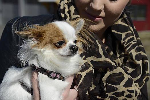 Teo SITCHET-KANDA - Dog And True Friendship 2