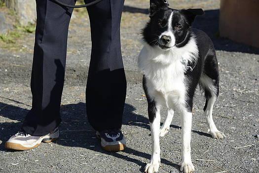 Teo SITCHET-KANDA - Dog And True Friendship 9