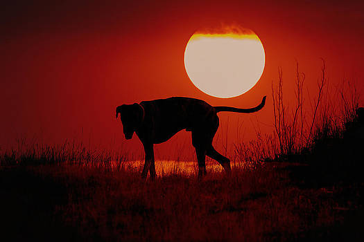 Dog at Sunset by Jana Thompson