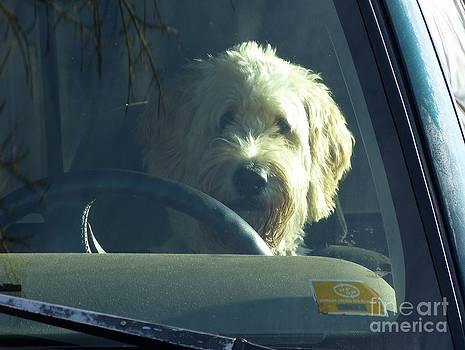 Christine Stack - Dog Driving a Truck