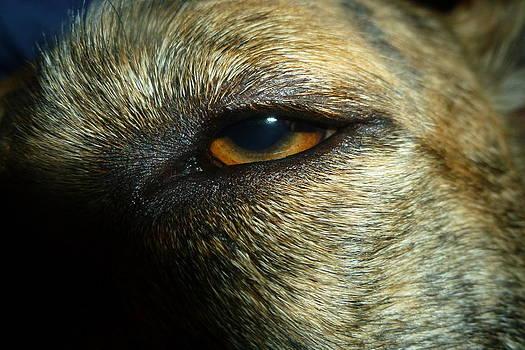 Dog Eye by Montana Wilson