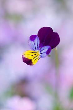 Devinder Sangha - Dog flower