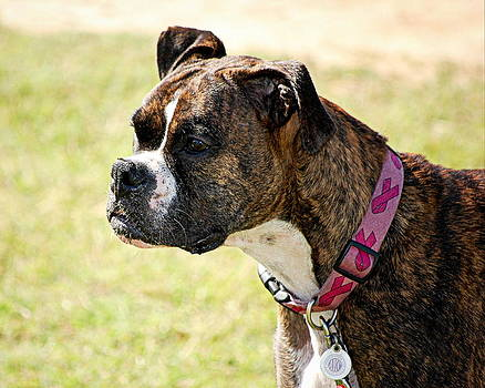 Dog Gone Pink by AJ  Schibig