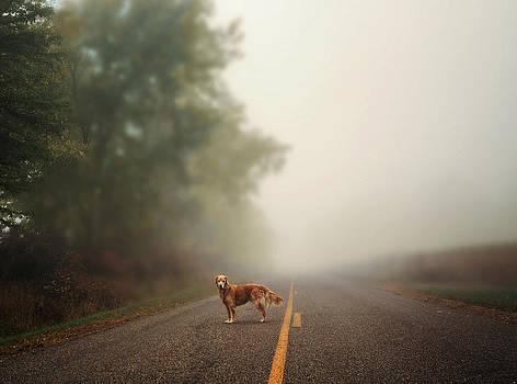 Dog on Fenn Road by LaTrice Dixon