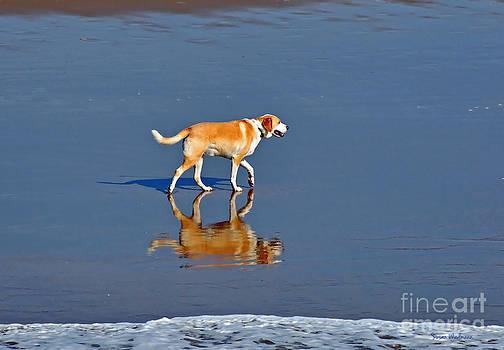 Susan Wiedmann - Dog on Water Mirror