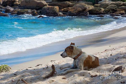 Dog resting on beach by Christina Rahm