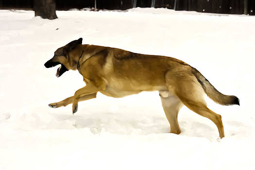 Dog Running In The Snow by Barbara Dean