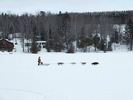 Dog Sled 1 by Gene Cyr
