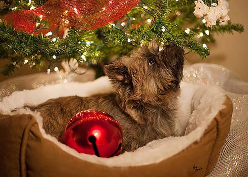 Dog Under Christmas Tree by Heidi Marcinik