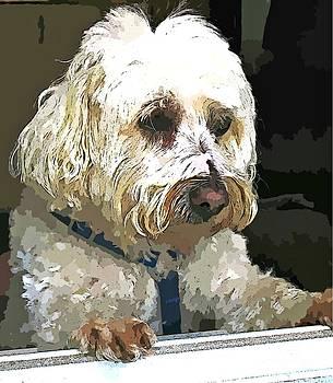 Doggie In The Window by Judy Palkimas