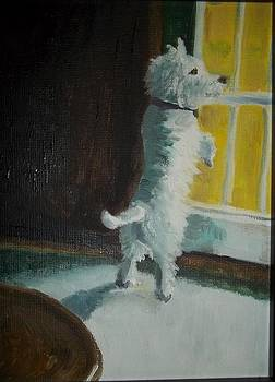 Doggy in the Window by Terry Godinez