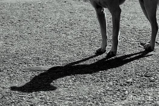 Dog's company by Vishakha Bhagat