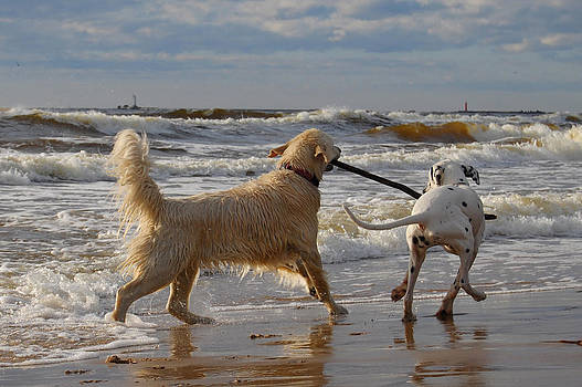Gynt   - Dogs friendship by the sea