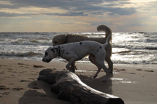 Gynt   - Dogs walk along the sea