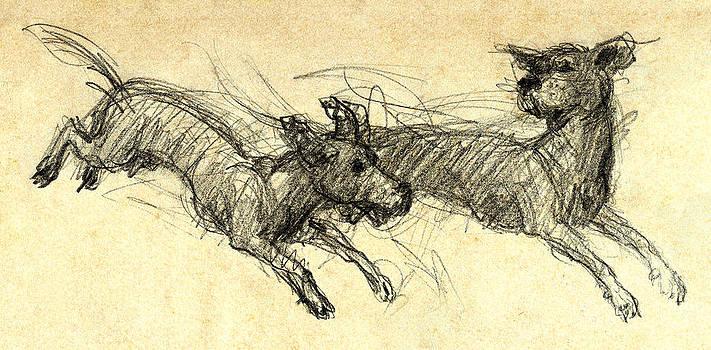 Nato  Gomes - DogSketch