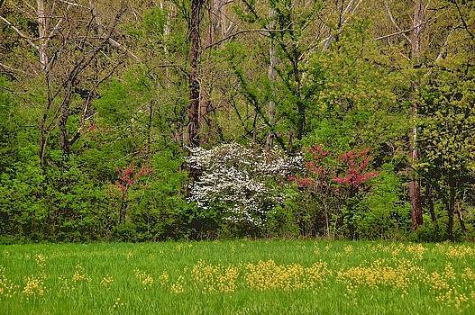 Dogwood and Red Bud in Bloom by Larry Bodinson