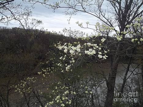 Dogwood Blossoms on Ridge Lake at Fox Ridge State Park by Michael Madlem