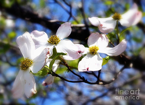 Dogwood Flow by Eva Thomas