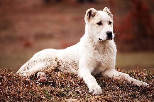 Dogy life  by Svetoslav Sokolov