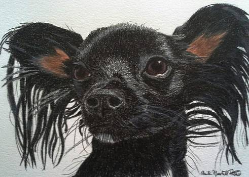 Dolly - Chihuahua/Dachshund Mix Commission by Anita Putman