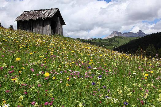 Susan Rovira - Dolomites in Bloom
