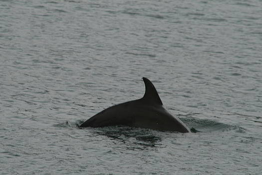 Dolphin Surprise by Beth Andersen