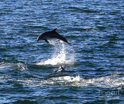 Dolphin leap 2288 by South Bay Skies