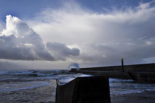 Dolphin over pier by Tony Reddington